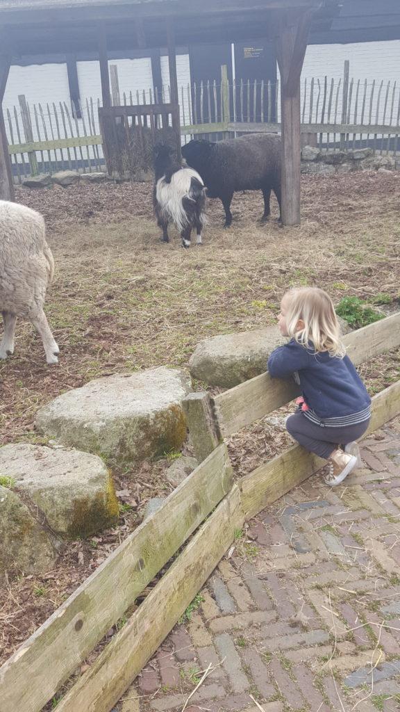 kinderboerderij emmen